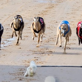 Greyhounds_Races